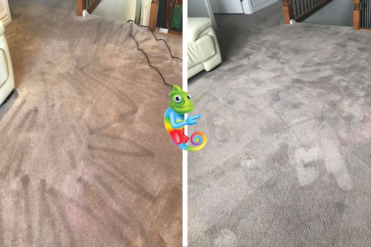 Dyeing full room carpet