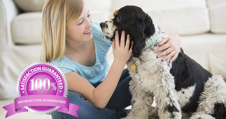 pet odour and urine removal